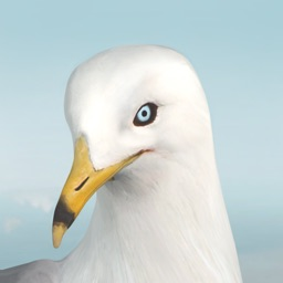 Jonathan Livingston Seagull 1