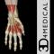 App Icon for Hand & Wrist Pro III for iPad App in Denmark IOS App Store