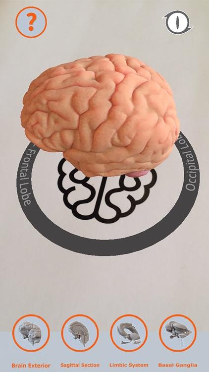 Cortical Brain