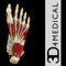 App Icon for Ankle & Foot Pro III for iPad App in Denmark IOS App Store
