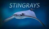 Stingrays Live