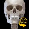 骨格 - 解剖学3D アトラス