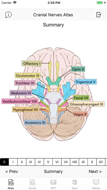 Cranial Nerves Plus screenshot-0