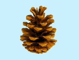 Add these pine cone stickers to your sticker collection