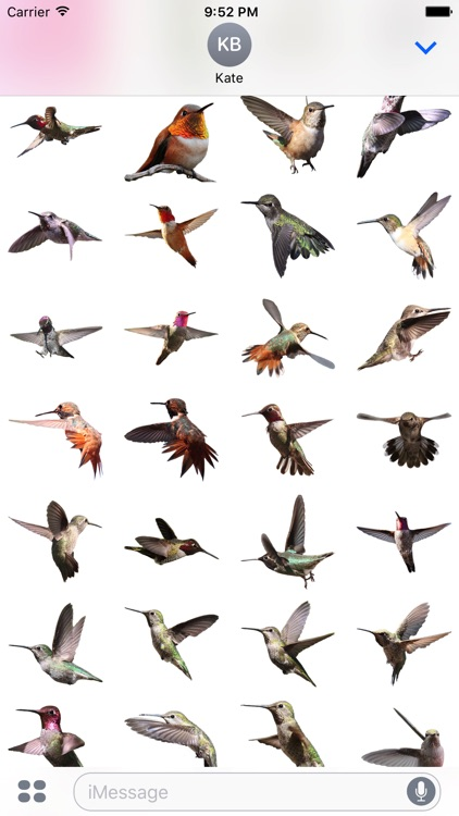 Hummingbird Sticker Pack screenshot-2