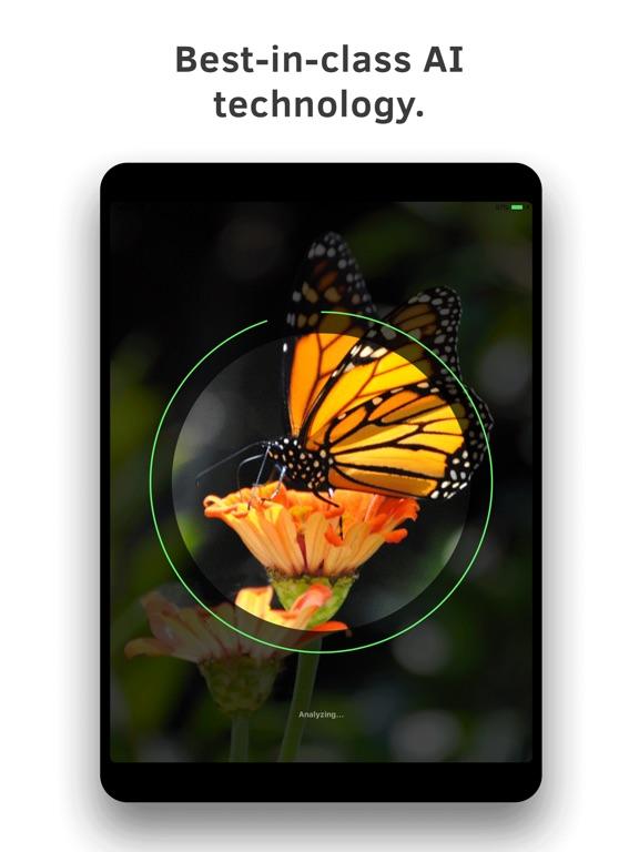 Insect Identification screenshot 9