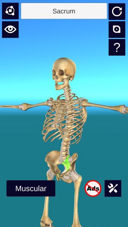 3D Anatomy +
