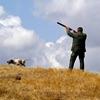 Hunting - birdcall birdsong