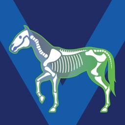 Bone Viewer - Horse Skeleton
