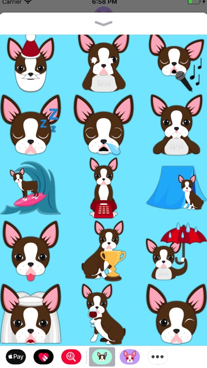 Chocolate Boston Terrier screenshot-4