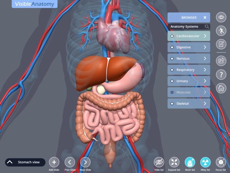 Visible Anatomy