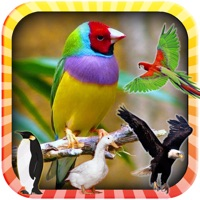 Codes for Learn the Birds Phonetic Hack