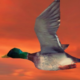 Duck Hunter Simulator - Free duck hunting games