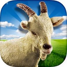 Activities of Crazy Goat - 2017