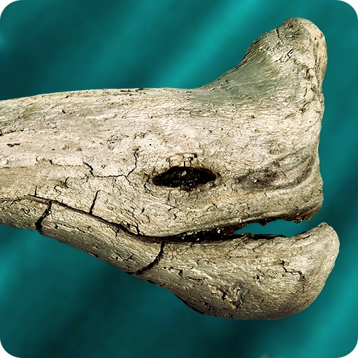 Make Your iOS Device Kinda Fishy With Aleksander Nordaas' Bizarre Driftwood Aquarium