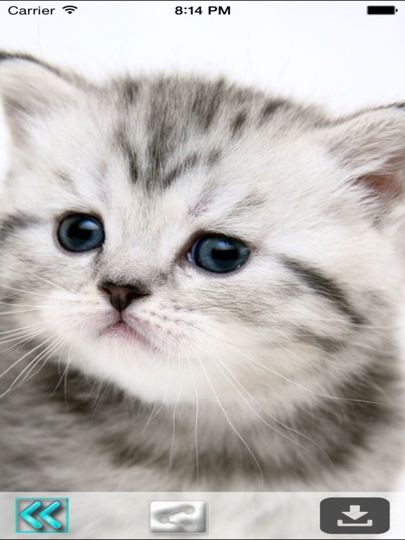 Cute Cats Wallpapers Hd Best Kitty Backgrounds App