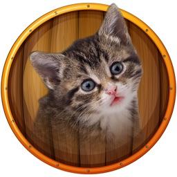 cat kitten kitty Pet Baby Animal jigsaw Puzzle