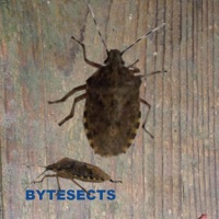 Codes for Bytesects  Real insects ants smasher game and screen saver kids game Hack