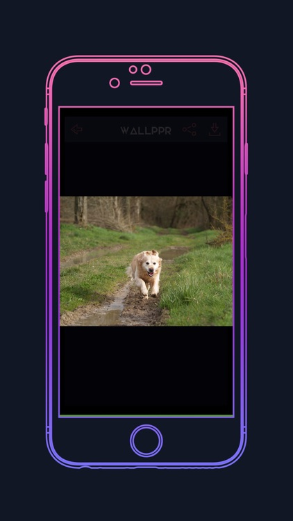 WALLPPR - High resolution HD wallpapers for iphone screenshot-4