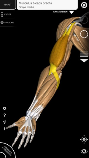 3D-Anatomie für den Künstler   v. 1.2 im App Store