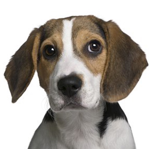 Beagle Sounds & Dog Barking