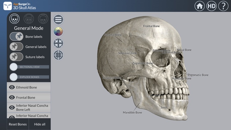 3D Skull Atlas screenshot-0