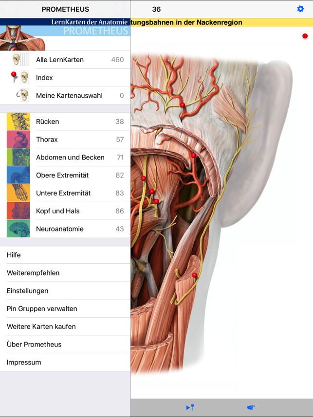 Ausgezeichnet Wege Zur Anatomie Lernen Zeitgenössisch - Anatomie ...