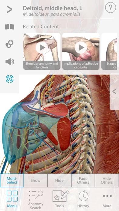Muscle Premium - Human Anatomy, Kinesiology, Bones - Revenue ...