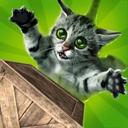 Cat Tap Tap