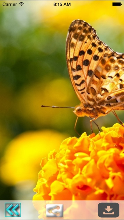 Butterfly Wallpapers(HD)-Best Backgrounds & Themes