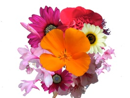 A collection of bright and colourful flowers for messages