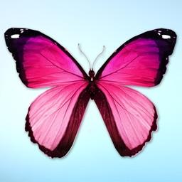 Beautiful Spring & Summer Butterflies Sticker Pack