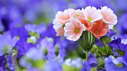 4K Flowers screenshot one