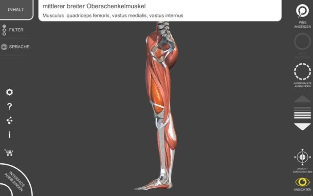 Schön Unterteilungen Der Anatomie Ideen - Anatomie Von Menschlichen ...