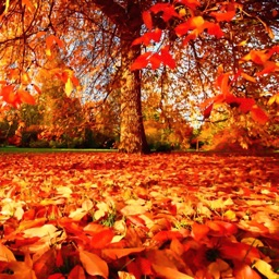 Autumn Wallpapers - Beautiful Home and Lock Wallz