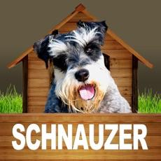 Activities of Schnauzer - Opoly