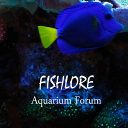 Fishlore Aquarium Fish Forum