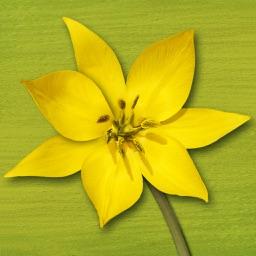 Wildflower Finder Switzerland – flower field guide