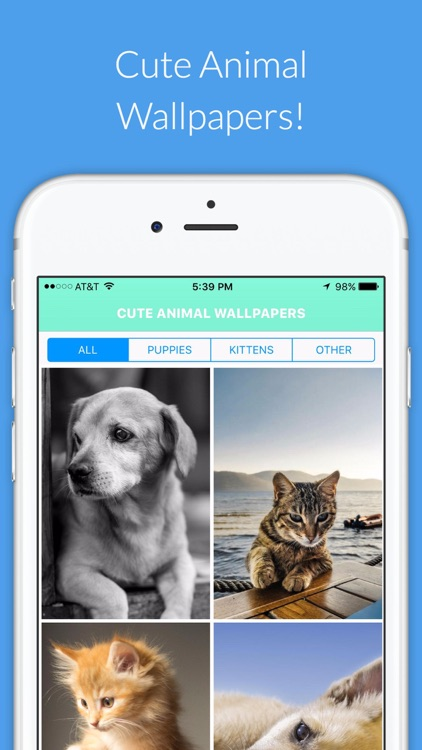 Cute Animal HD Wallpapers - Puppies,Kittens & more