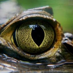 Crocodile Simulator 3D : A Commando Hunting Game