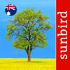Tree Id Australia - Sydney's Urban Trees & Shrubs