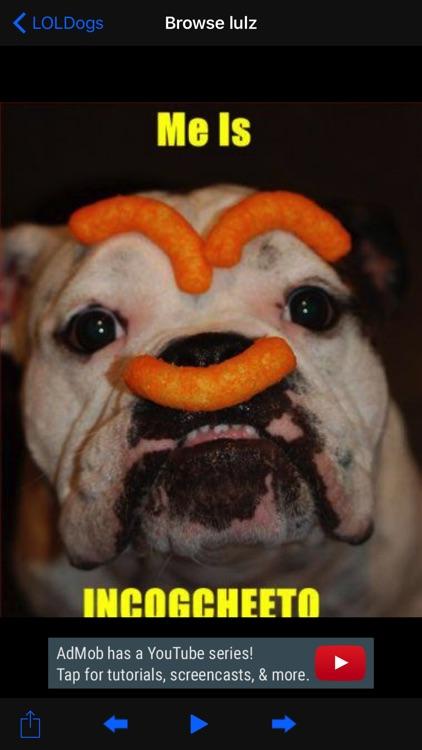 LOLDogs - Doggos & Pupper Pics