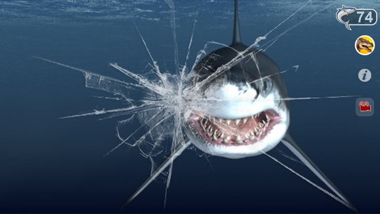 Talking Great White : My Pet Shark screenshot-4