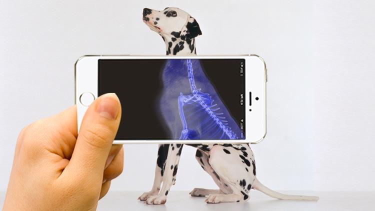 Xray Animal Scanner