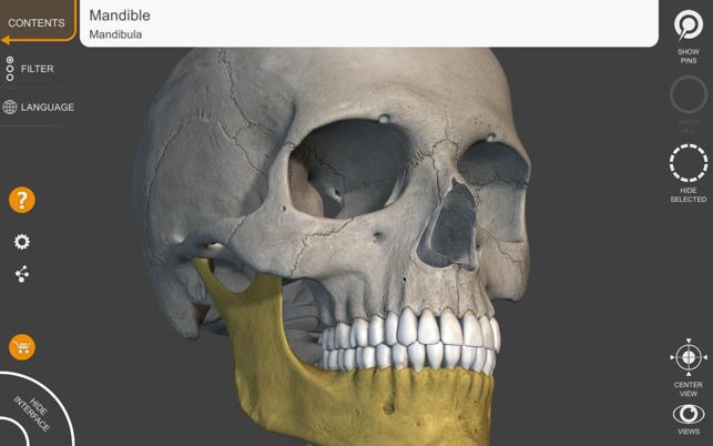 Skeleton 3D Anatomy on the Mac App Store