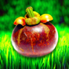 Superfood HD