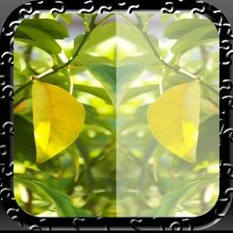 Free Photo Mirror Pro Edition