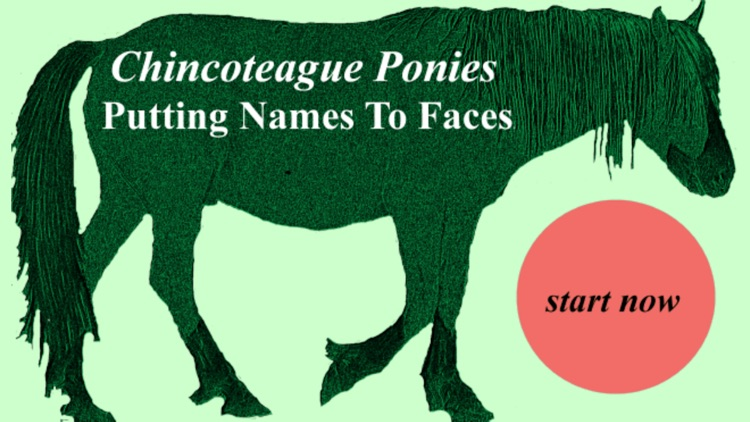 Chincoteague Pony Names screenshot-0