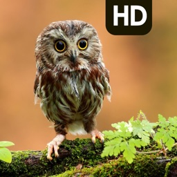 Best Owl Backgrounds | Owl HD Pic.ture & Wallpaper