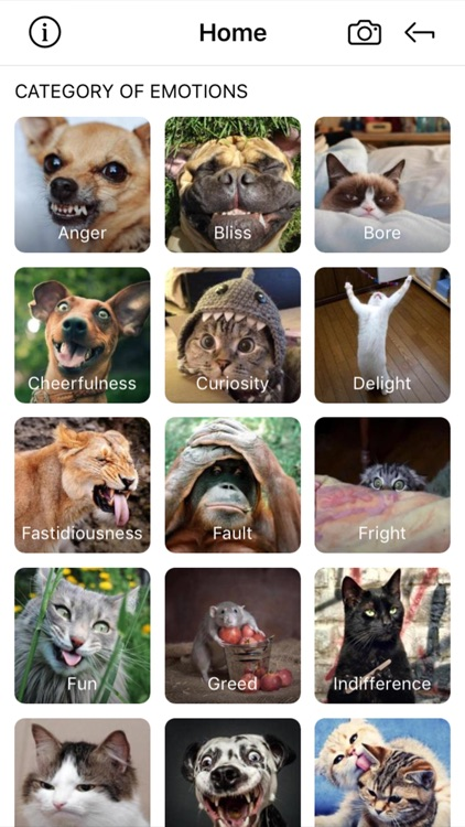 WildEmotions: add text to photos with animal cards